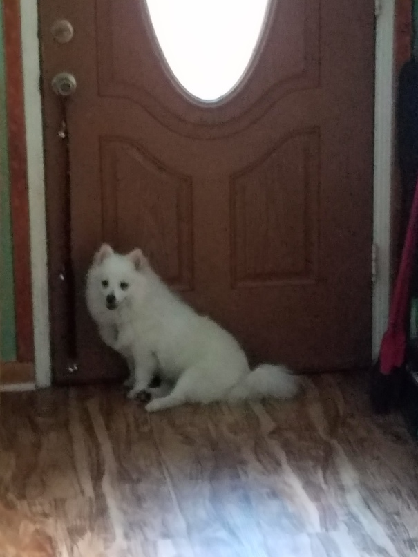 baby-dog-at-door