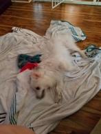 baby dog after bath
